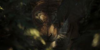 Shere Khan Benedict Cumberbatch Mowgli Legend of the Jungle