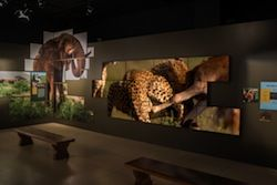 Clarity Matrix Video Wall Creates Memorable Experience at National Geographic Museum Exhibit