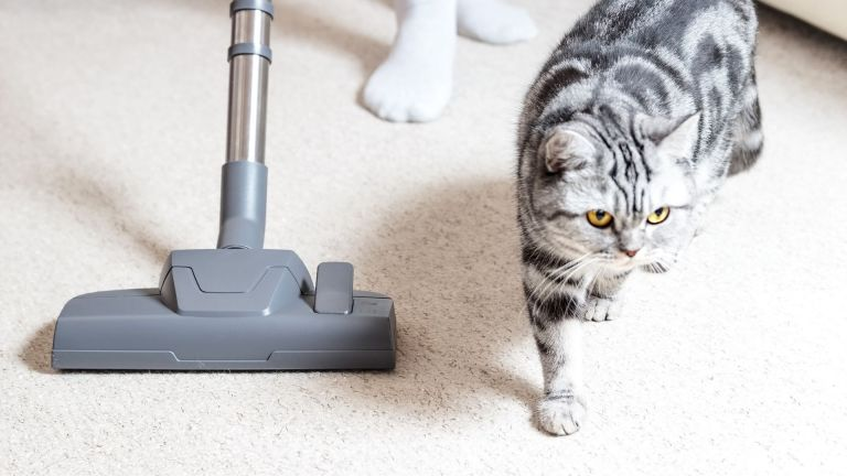 Got a pet? You NEED this vacuum cleaner!