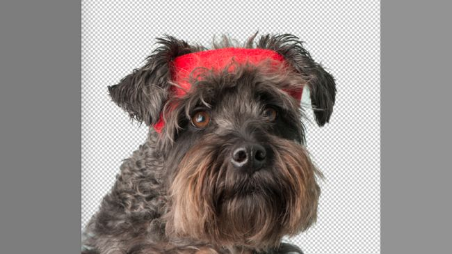 Photoshop tutorials: Dog with bow on head