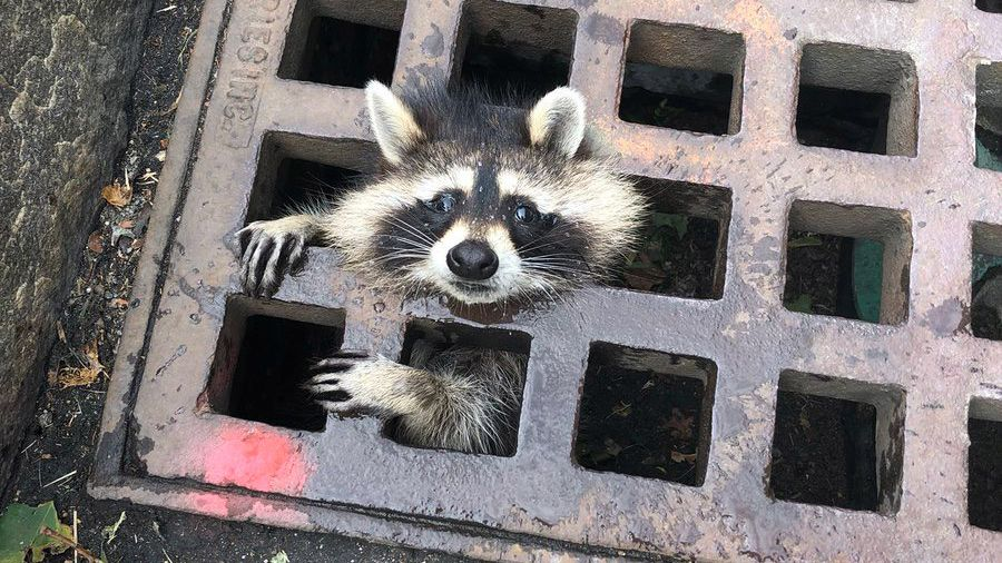 11 Times Animals Got Stuck in Things in 2019