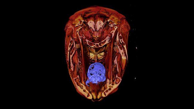 parasita vampiro são encontrados em peixes