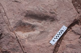 stolen theropod track