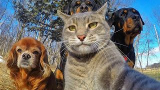 Animals posing for a selfie