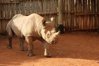 rhino flight eliska