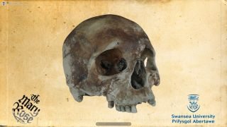 Mary Rose Shipwreck Skull
