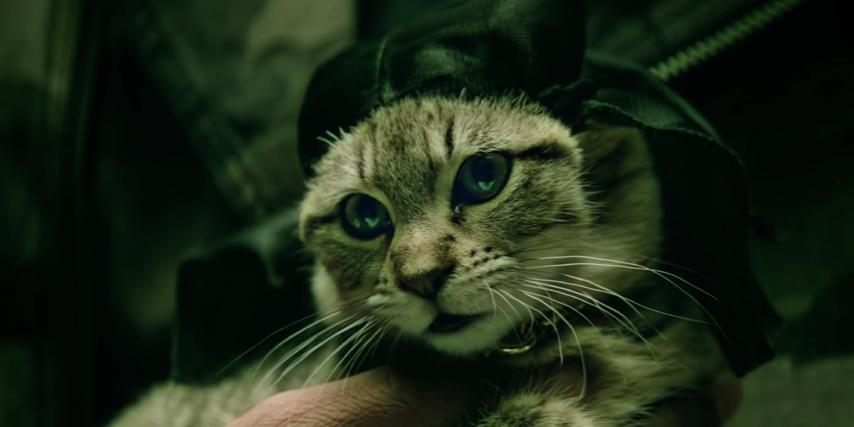 Keanu Reeves voices a kitten named Keanu in Keanu