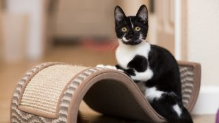 How to get cat to use scratching post: A kitten rests on a scratching cat toy indoors.