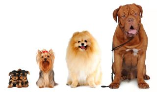 dogs-various-02