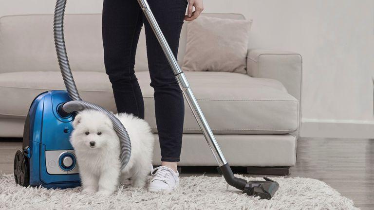 best vacuums for pet hair