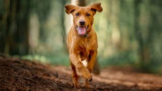 international dog day: what is it and how can you celebrate