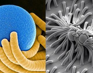 Catch-and-Release Nanofibers