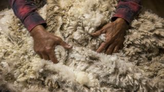 hands fondling merino wool