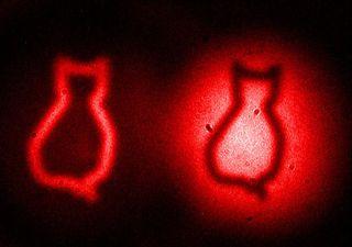 The cat images represent the famous Schrödinger cat paradox