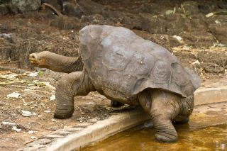 tortoise, endangered species, extinct