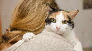 Scientific cat quiz reveals what kind of relationship you have with your cat