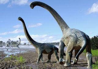 Sauropod bones from Australia