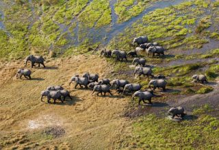 A herd of elephants are photographed from above.