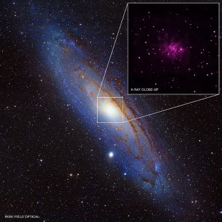Trove of Black Holes Found in Andromeda Galaxy