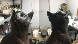 A closer view of Félicette's face.