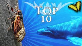 Top 10 Most Incredible Animal Journeys