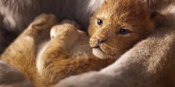 The Lion King cub Simba in Jon Favreau's 2019 movie
