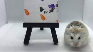 Pip the painting hamster is inspiring pet owners to take up art with their furry friend
