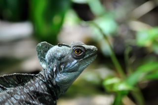 Close-up of a lizard in a rainforest