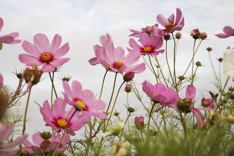 Monty Don's tender annuals tips