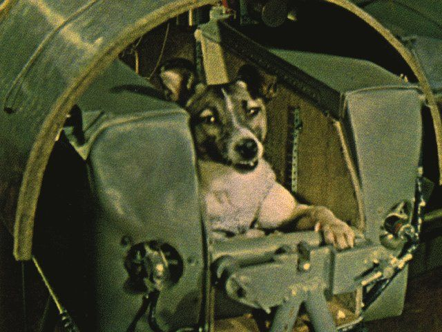 Laika The Dog The First Animals In Space Space