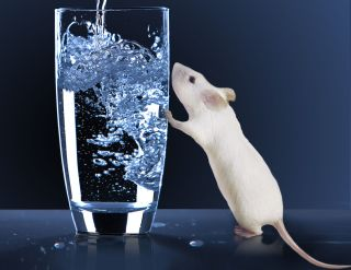 mouse with glass of water