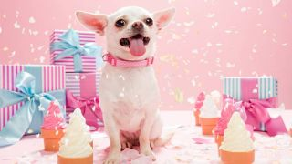 best dog subscription box: Dog celebrates special occasion