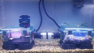 An underwater hamster enclosure