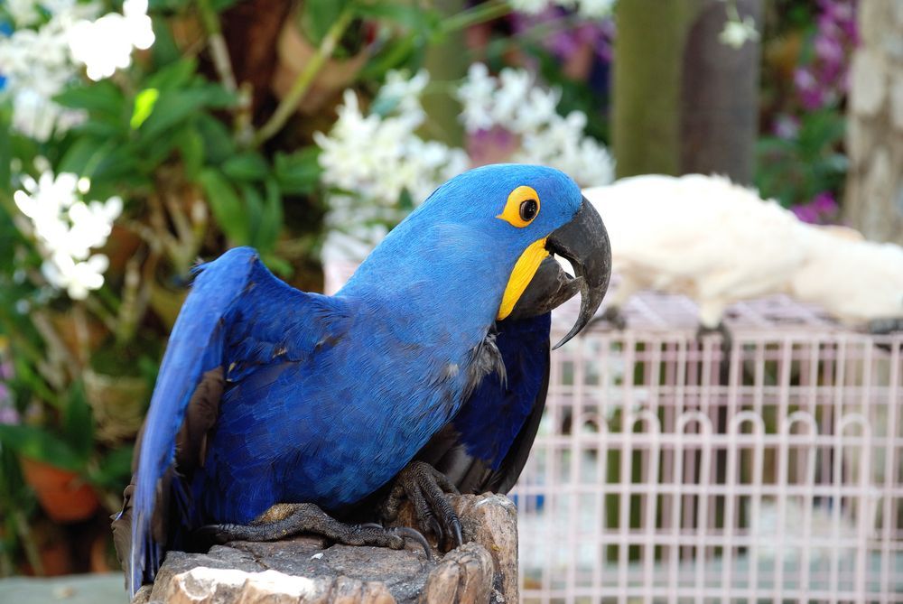 Parrot Facts: Habits, Habitat & Species | Live Science