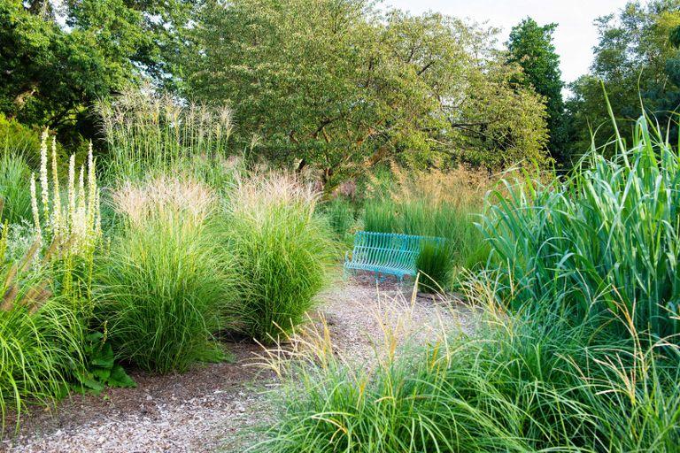 garden gravel ideas in the grass garden at RHS Wisley