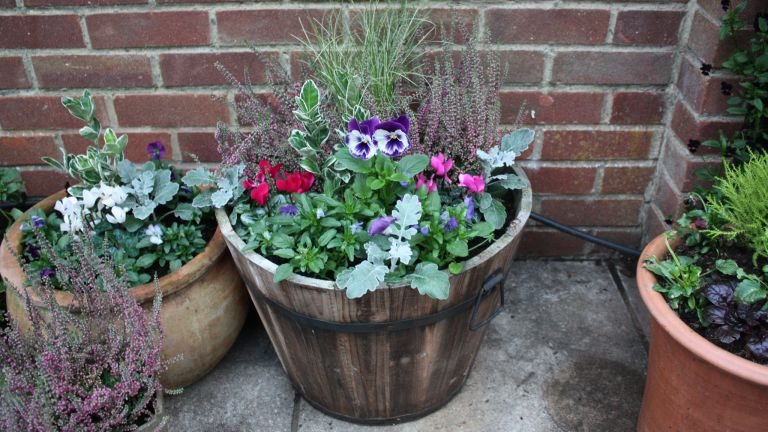 how to plant a winter container