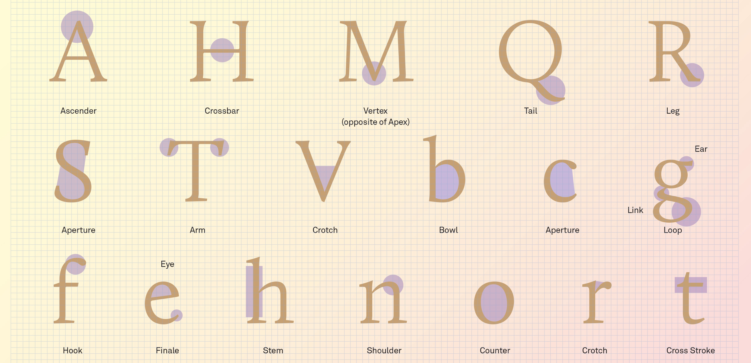 Brand typography: letters and their anatomy