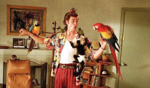 Ace Ventura: Pet Detective Jim Carrey surrounded by animal pals