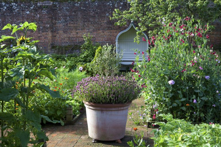 companion planting in raised bed