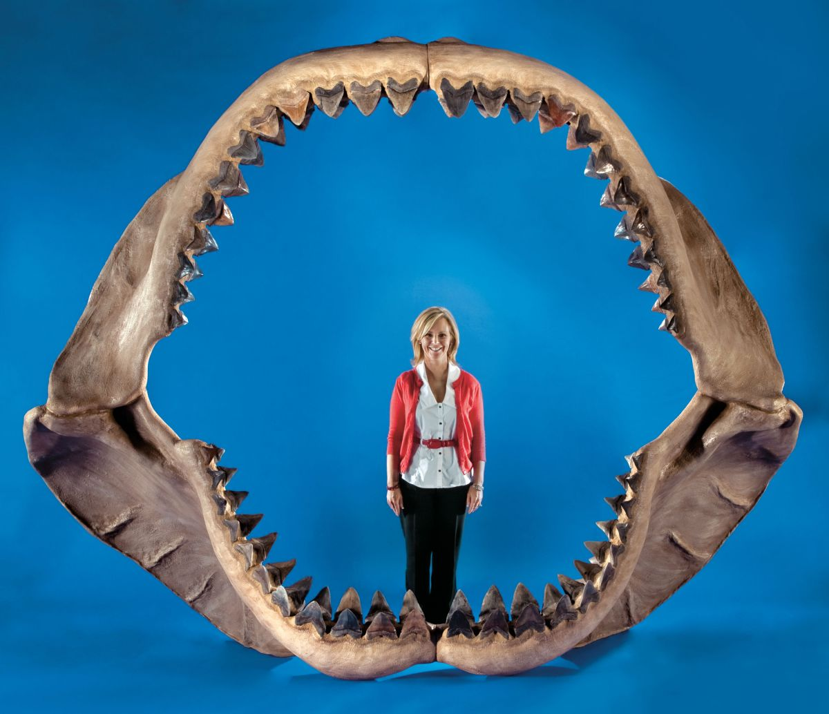 For Sale: World's Largest Shark Jaws | Live Science