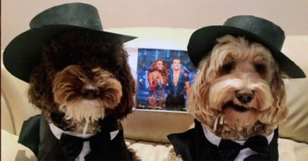 strictly s claudia winkleman reveals how these pups link