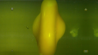 Still frame captured from a high-speed video of a spinning egg yolk decelerating, squishing into a flat disk