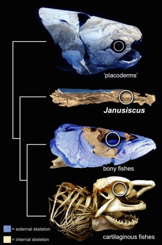 fish fossil comparison