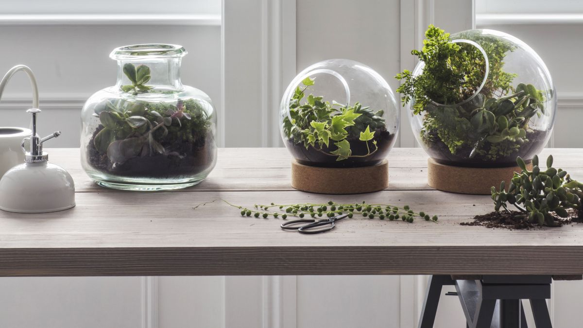 How to make a terrarium at home – 10 steps using succulents, moss and more