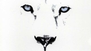 White Lion - Pride