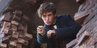 Newt Scamander Edie Redmayne Fantastic Beasts and Where to Find Them