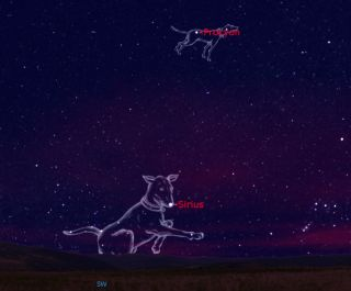 Canine Constellations: Night Sky Goes to the Dogs