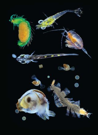 array of deep-sea creatures
