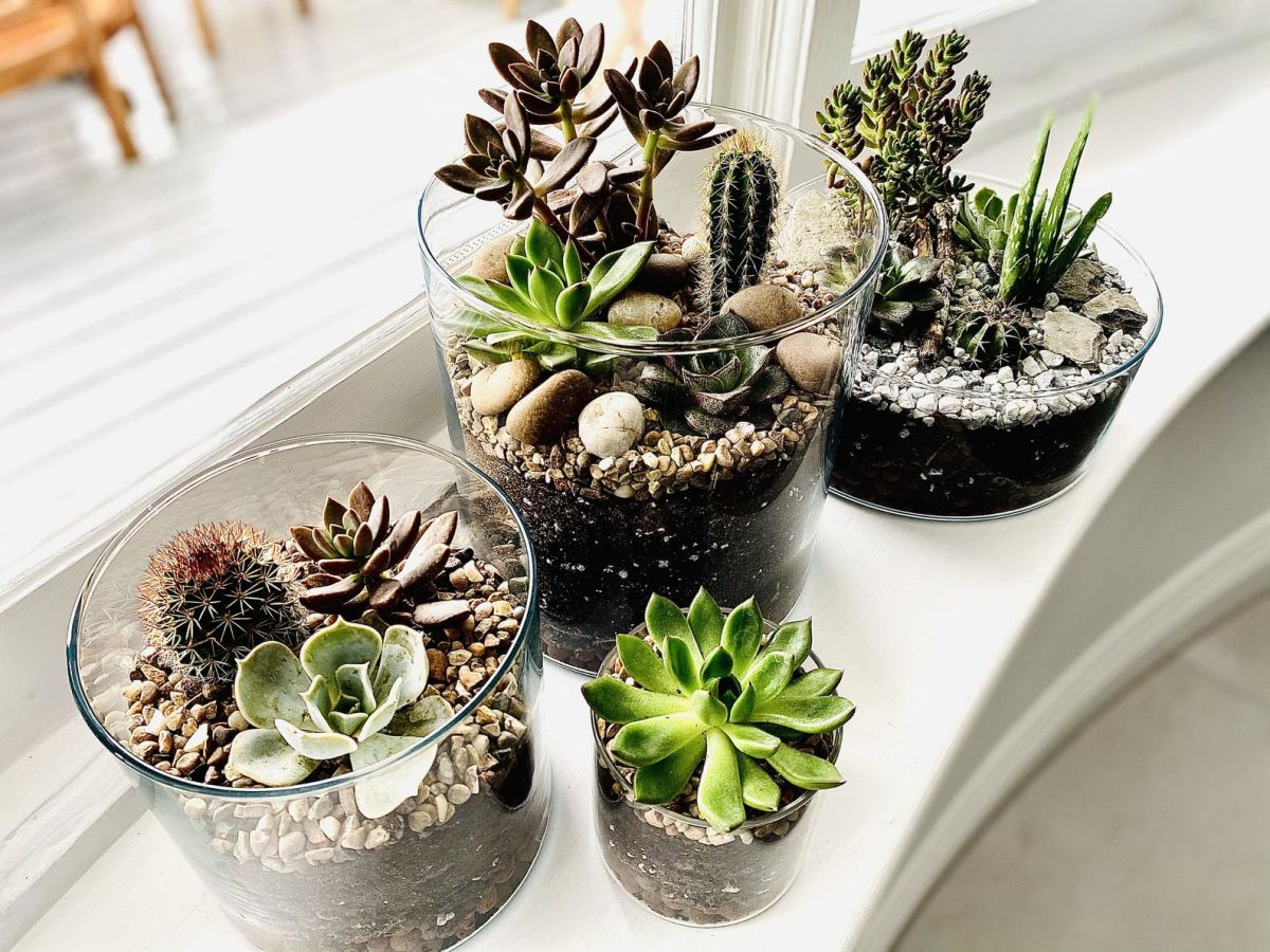 These terrarium ideas are easy to recreate at home