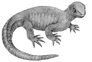 <em>Pappochelys rosinae </em> is a shell-less ancestor of modern-day turtles that lived 240 million years ago.